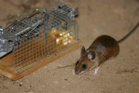 Maus Geht Nicht In Die Falle by Vorsicht Falle Aus Die Maus F 252 R Speedy Gonzales Gibt S