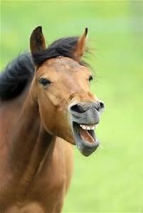 Bilder Von Pferden : aggressivit t bei pferden was tun ~ Frokenaadalensverden.com Haus und Dekorationen