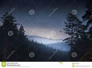 Night Pine Trees Forest & Mountain And Thunder Stock Photo ...