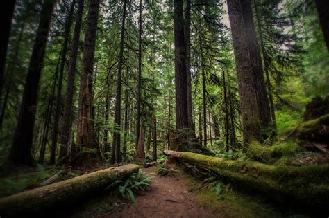 forest in usa olympic national forest forest in washington thousand wonders