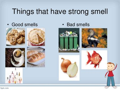 senses smell things use strong bad smells nose