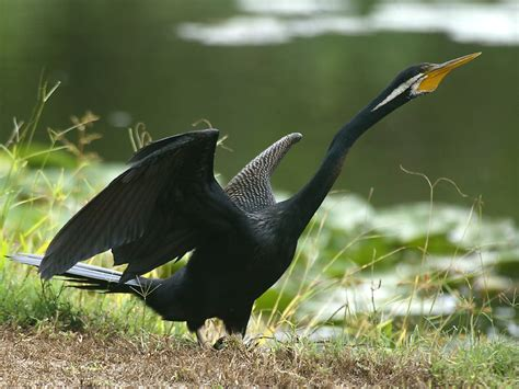 Beautifull Birds Wallpapers Daertube