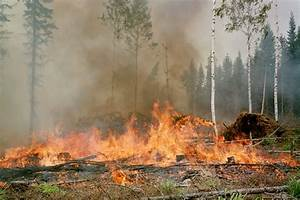 Indonesia slash-and-burn deforestation may trigger ...