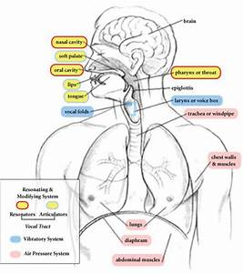 1  Anatomy Of The Human Voice Production Apparatus With