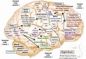 Brain Hemispheres Maps