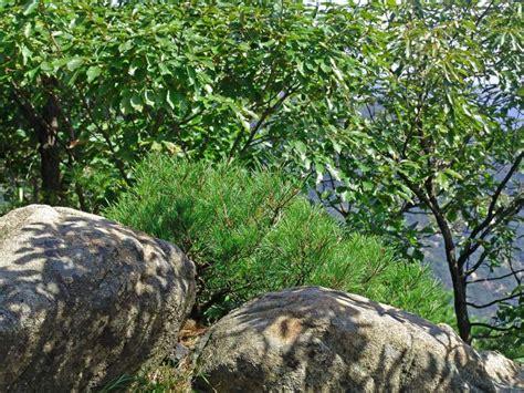 Samaksa photo - Jean-Claude Riboulet photos at pbase.com