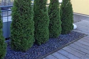 Moderne Gärten Bilder : native plants online pflanzen versand native plants ~ Eleganceandgraceweddings.com Haus und Dekorationen
