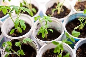 Ab Wann Erdbeeren Pflanzen : ab wann tomaten vorziehen gr ser im k bel berwintern ~ Eleganceandgraceweddings.com Haus und Dekorationen