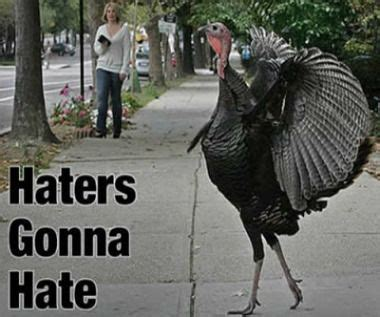 Turkey Meme - haters gonna hate turkey meme