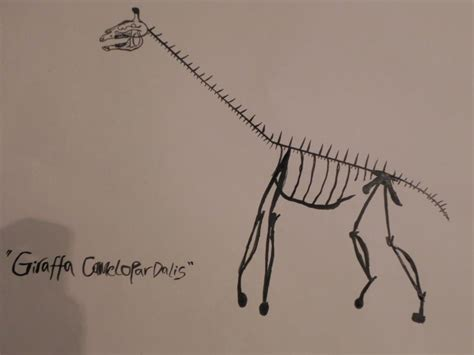 Giraffe Skeleton By Adz6661 On Deviantart