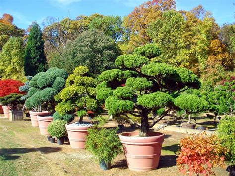 japanese garden nursery 7 best images about japanese garden nursery on pinterest landscape art oriental and nurseries
