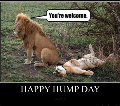 Happy Hump Day Meme - funny hump day www pixshark com images galleries with a bite