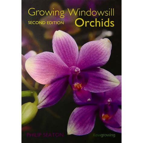orchids windowsill growing orchid