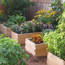 Natural Cedar Raised Garden Beds Eartheasycom