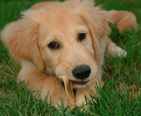 Cute Animals Top 20 Cutest Dog Breeds  Amazing Creatures