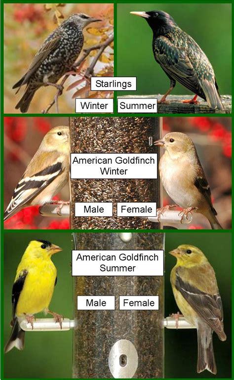 wild birds unlimited february 2012