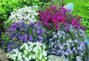 Aus Welchen Farben Mischt Man Lila : farben im garten blumen gekonnt arrangieren obi ~ Orissabook.com Haus und Dekorationen