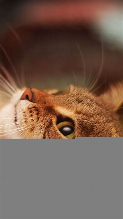 Cat Cool Iphone Wallpapers Background Lying