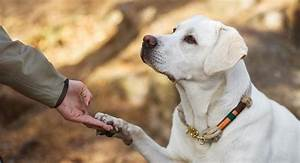 residential dog training should you send your lab away With residential dog training