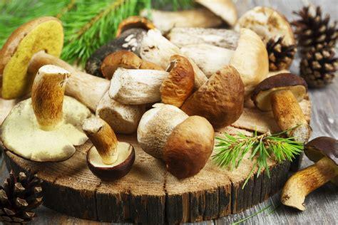 pilze so gesund und vielf 228 ltig sind die beh 252 teten waldbewohner