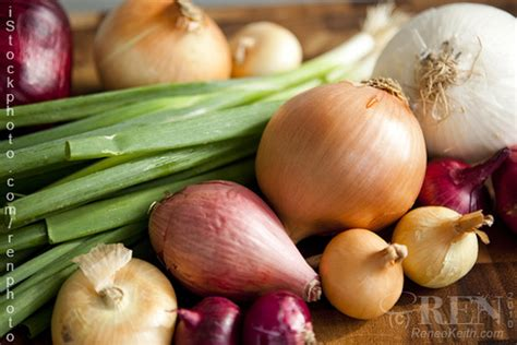 types of onions different types of onions different types of onions inc flickr