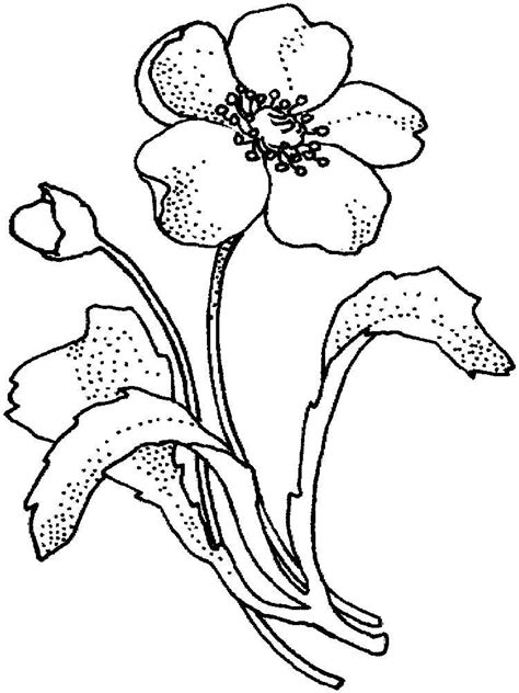 poppies coloring pages  coloring pages  kids