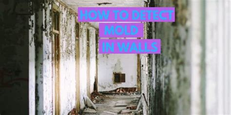 detect mold  walls