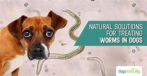worms in dogs symptoms