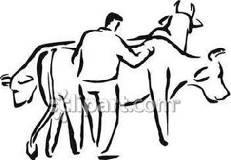 man herding cattle royalty  clipart picture