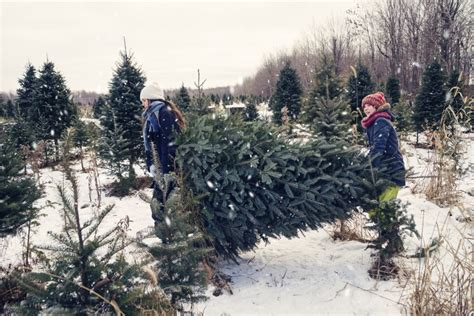 live christmas trees near me where to buy live trees near hickory prospect vision
