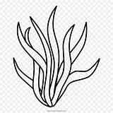 Seaweed Algas Drawing Kelp Clipart Forest Line Simple Transparent Clip Drawings Pages Ocean Algae Flower Illustrations sketch template