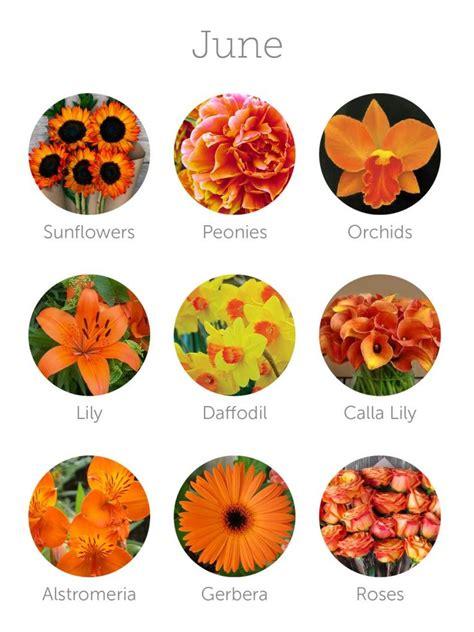 october birth flowers ideas  pinterest