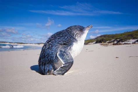 delightful pictures show  animals enjoy sunbathing
