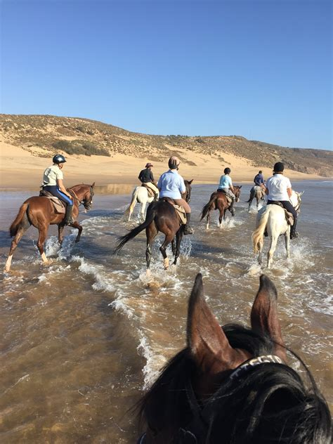 morocco arabian stallions sand sun riding splashing faster waves through before some