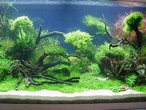 Aquarium Einrichten Anfänger : tipps einrichtung ~ Lizthompson.info Haus und Dekorationen