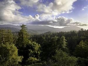 Big Basin Redwoods SP | Oldest California State Park: 1902 ...