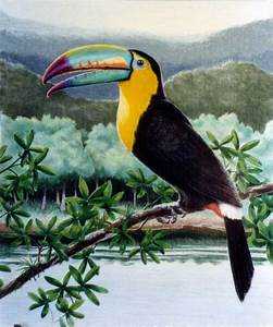 A toucans life cycle || toucans facts photos and diets ...