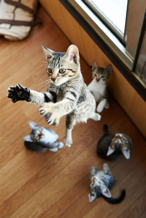 cats jumping play funny ninjas designbump
