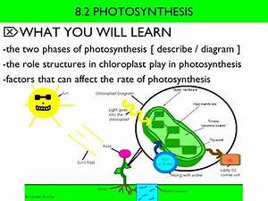 What You Will Learn 8 2 Photosynthesis