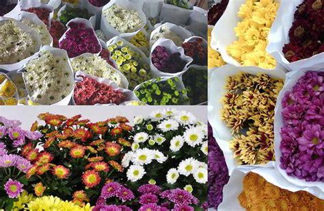 tips  pengawetan bunga krisan  tetap segar