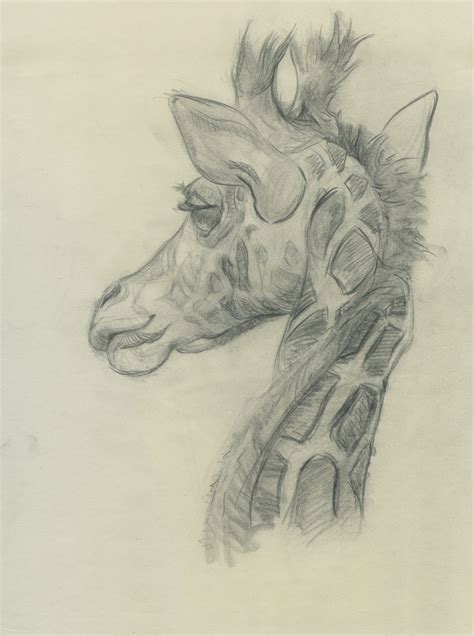 heather branscom animal drawings