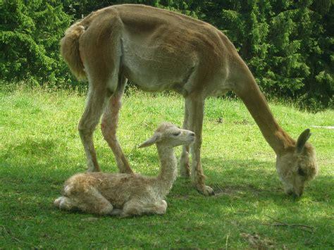 baby tiere bilder baby tiere 30 s e baby tiere sehen sie doch nicht niedlich aus s sse baby