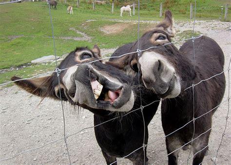 divertidas fotos de animales haciendo expresiones graciosas
