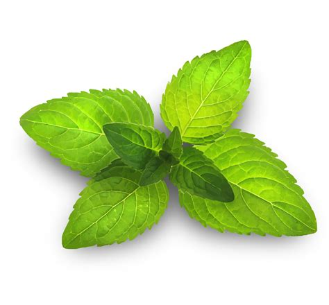 Stop Ibs Digestive Discomfort With Peppermint Oil Terry