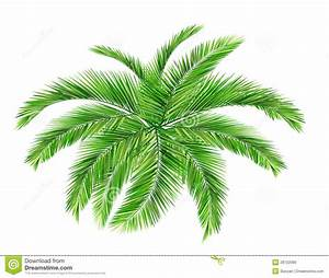 Coconut leaves clipart - Clipground
