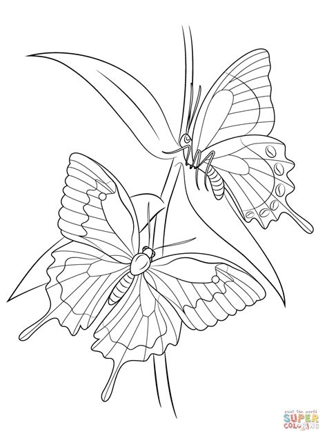 ulysses butterfly quilling patterns coloring pages