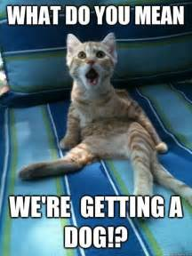 cat what do you jokes memes pictures