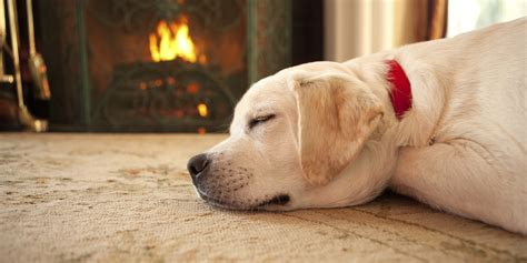 dogs for fireplaces 8 fireplaces to help unwind your mind huffpost