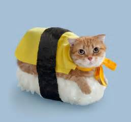 28 costumes for cats that will put a smile on