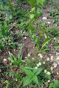 11 Pflanzen Methode : lauber methode fit wie ein diabetiker messen ~ Lizthompson.info Haus und Dekorationen
